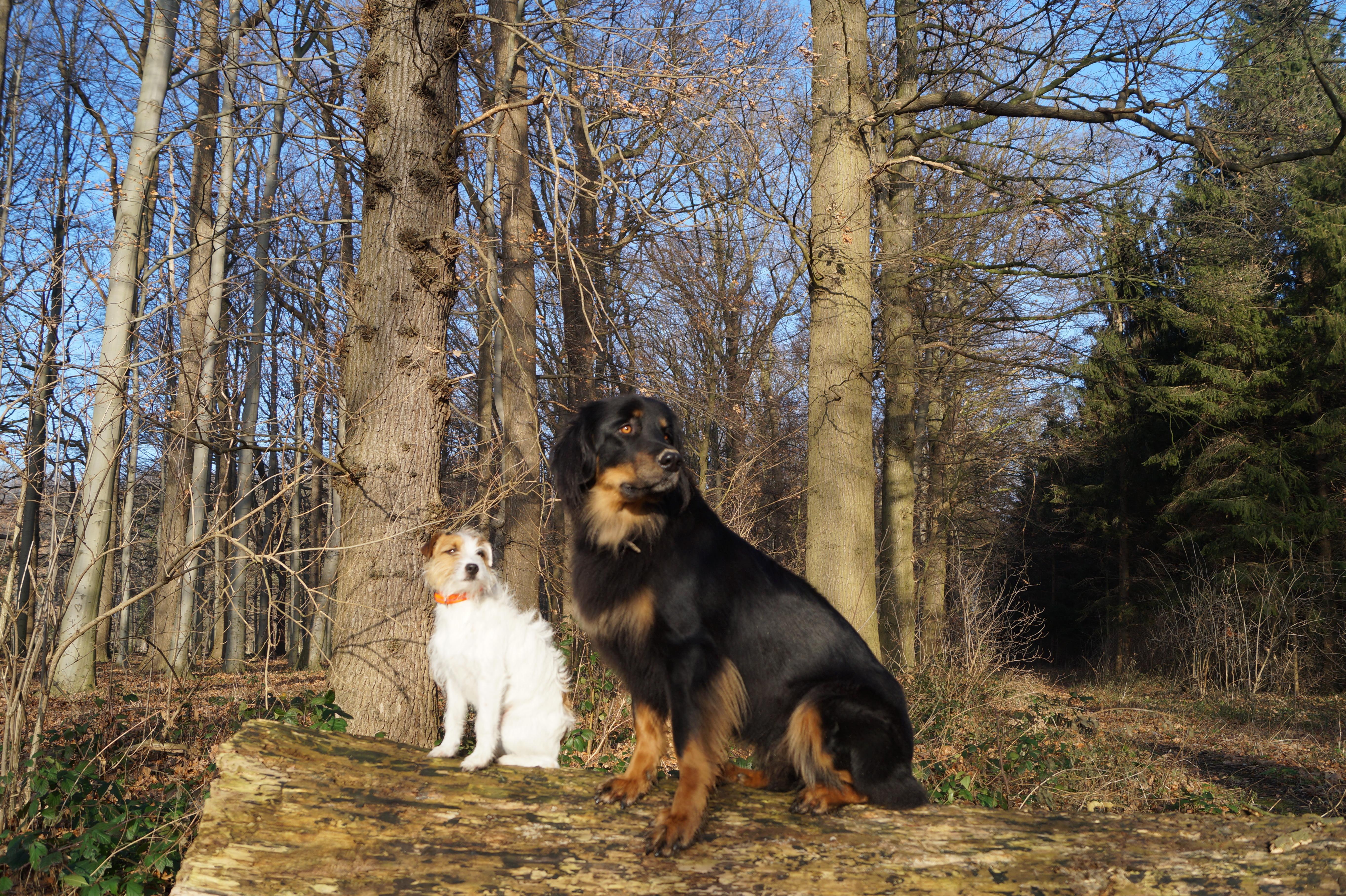 Lily und Cara