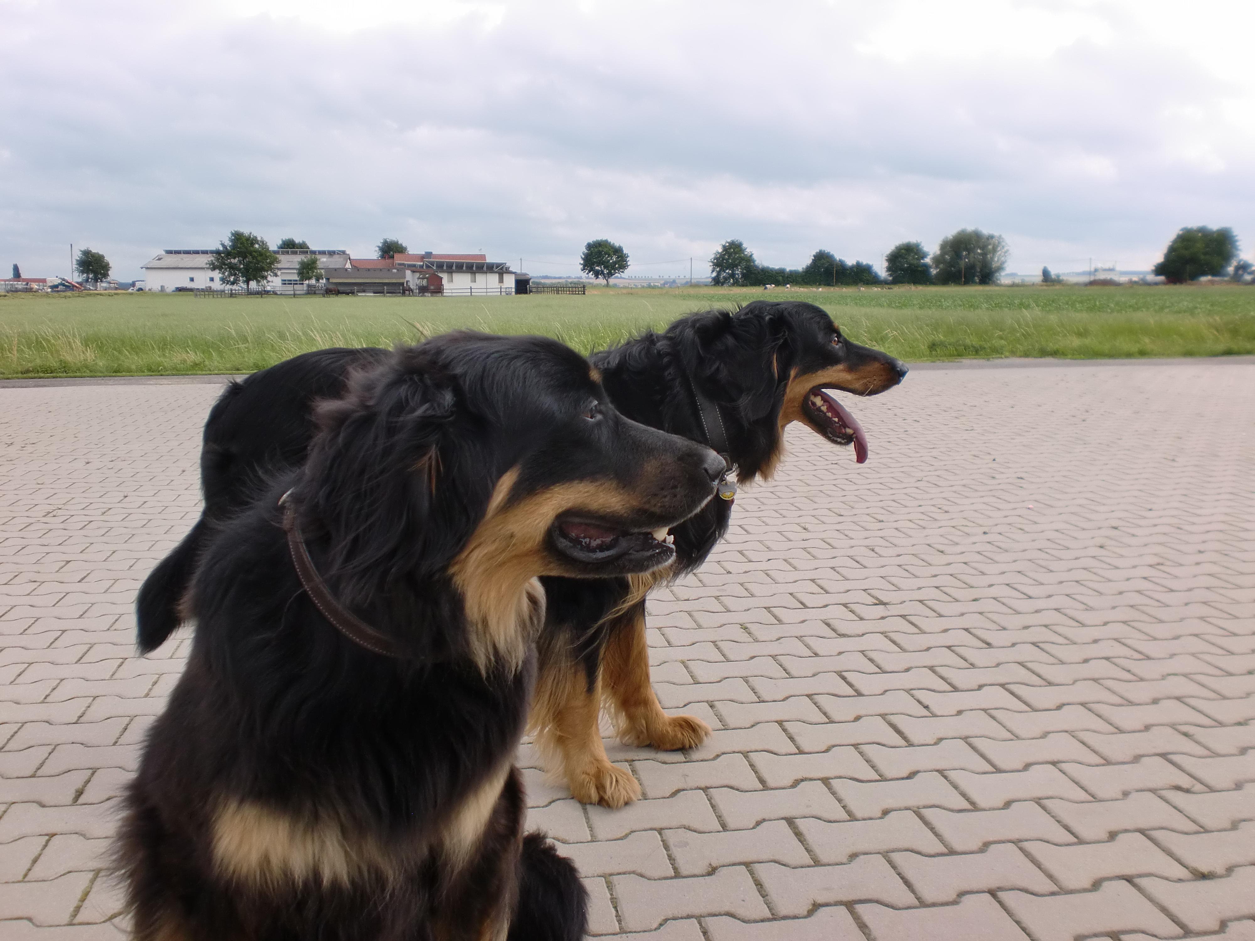 Cara und Duke Seite