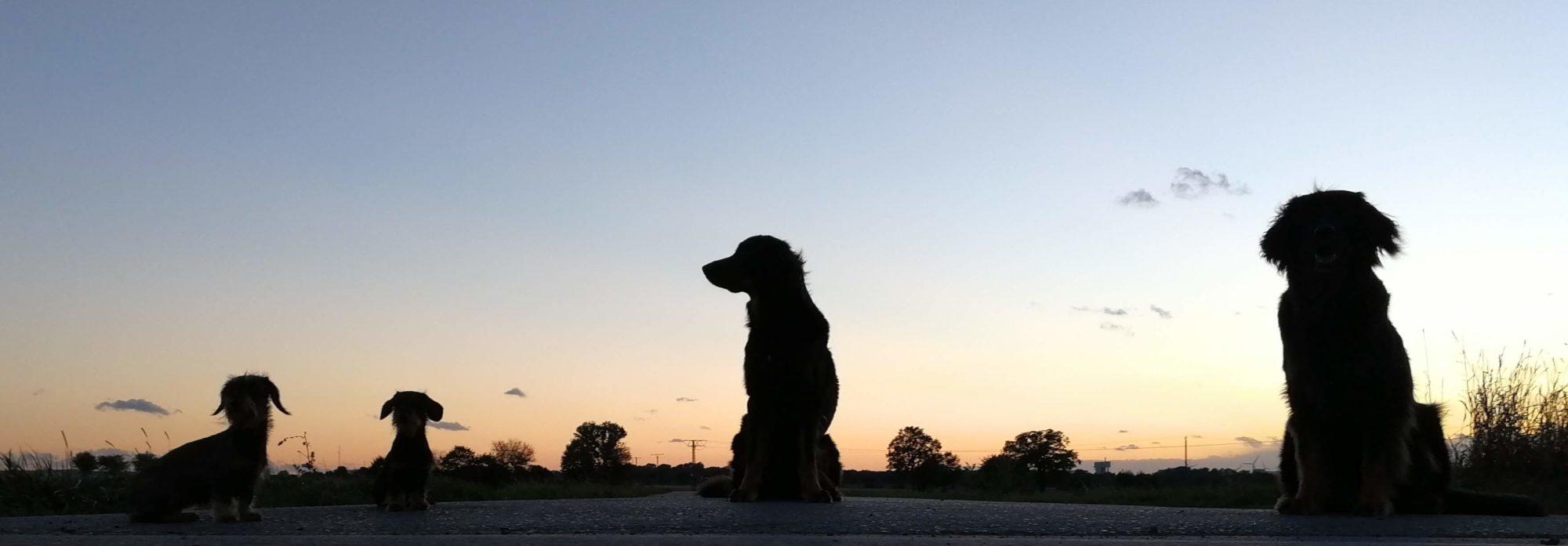 Hunde vom Melsterberg